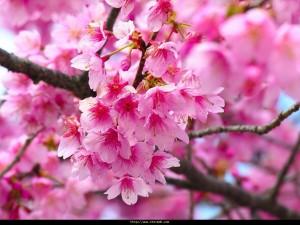 bahar geldi hoş geldi