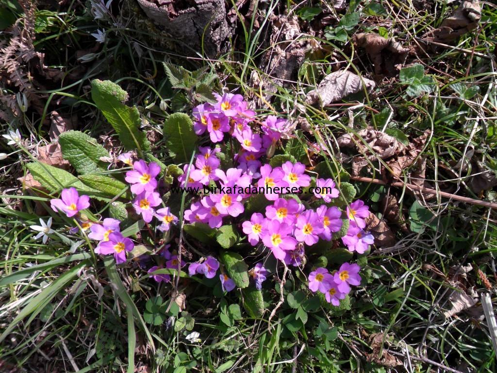 leylak rengi çiçekler